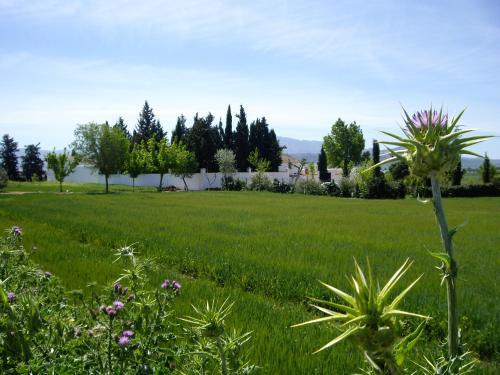 Casa de campo Cortijo Jabonero (España Mollina) - Booking.com