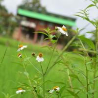 Hinpha Homestay