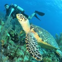 Paul casa de praia & Nemo dive, centro de mergulho